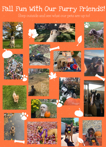 H-F pets love to play outside in the fall!