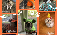 A few of our furry friends had Halloween costumes to share!