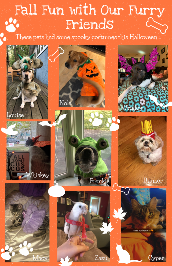 A+few+of+our+furry+friends+had+Halloween+costumes+to+share%21