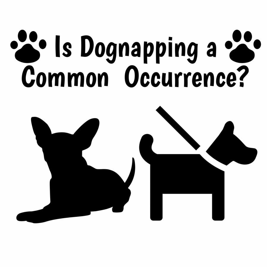 Is Dognapping a Common Occurrence?